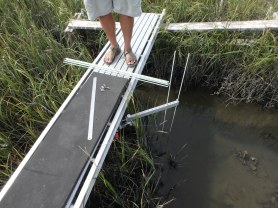 Rod-Surface Elevation Table with rods being set to rest on the surface of the sediment.