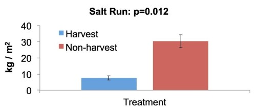 Differences in cultch density between harvest and non-harvest zones in Salt Run.