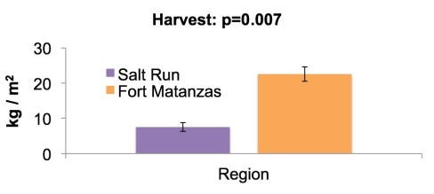 Differences in cultch density of harvested reefs between the Fort Matanzas and Salt Run regions of St. Augustine, FL