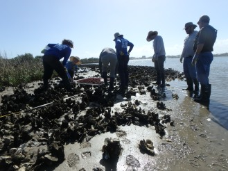 GTMNERR and NEAP led oyster trip in St. Augustine's Salt Run region