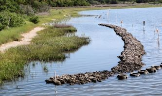 Natural Oyster Reef What oysters have to s...