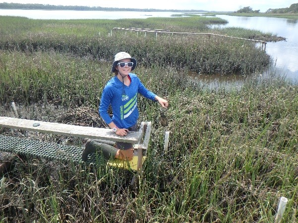 Caitlin deploying traps in salt marsh