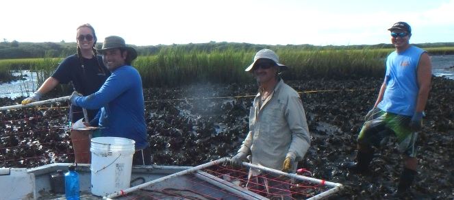 Staff and volunteers conducting oyster research in Moses Creek