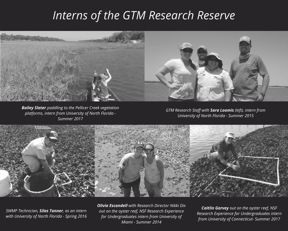 Interns of the GTM Research Reserve
