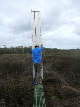 Lowering scaffold plank to determine distance to next section to build into the marsh.