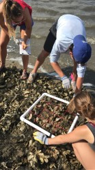 Group of students collecting information on the perfect cover of live oysters on one of the artificial reefs.